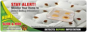 BUGGY BEDS GLUE TRAPS